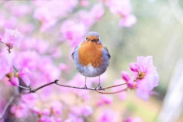 natuur, wildlife, natuurfotografie, wildlife fotografie