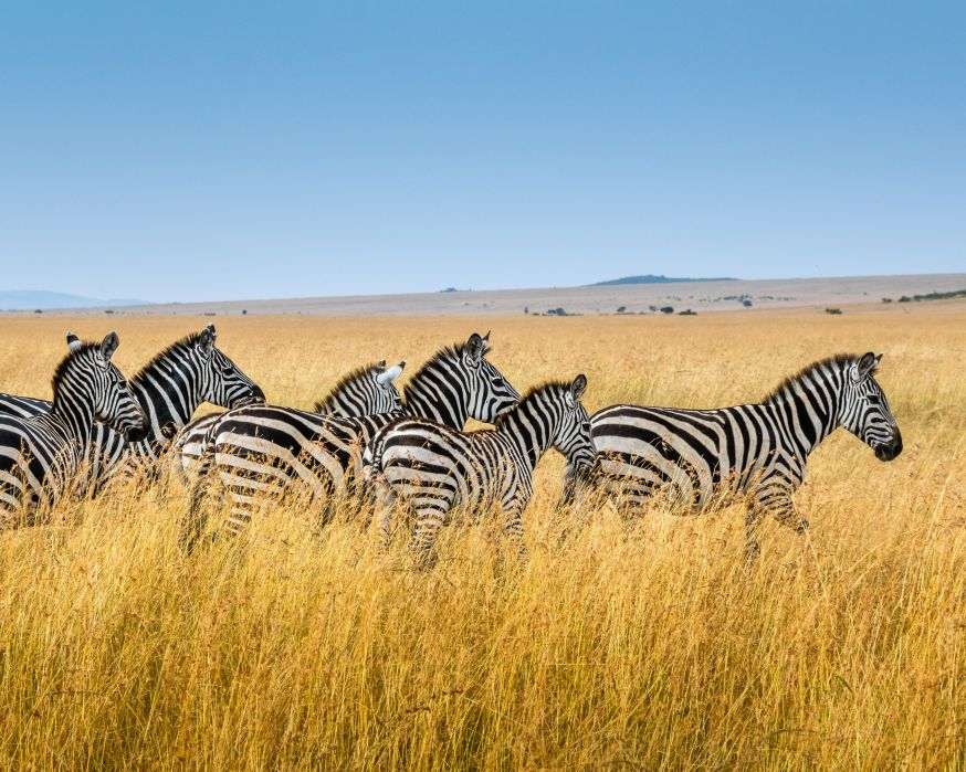 Safari, safarifotografie, wild dieren, wildlife fotograferen, wildlife