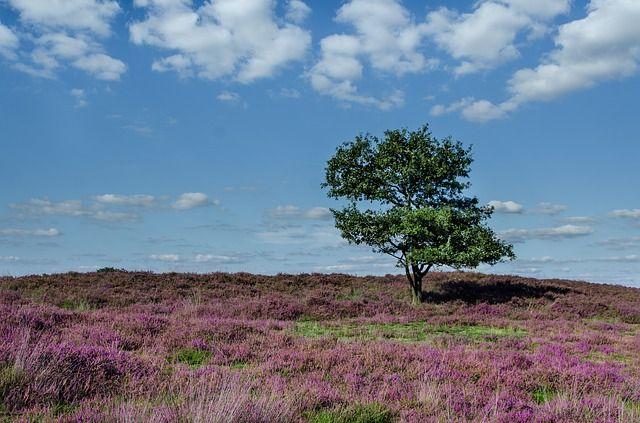 heide, landschapsfotografie, natuurfotografie