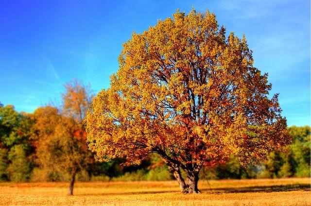 herfst, herfstkleuren, herfstkleuren fotograferen