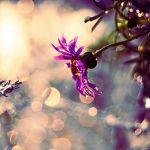 afbeelding van amber.spits