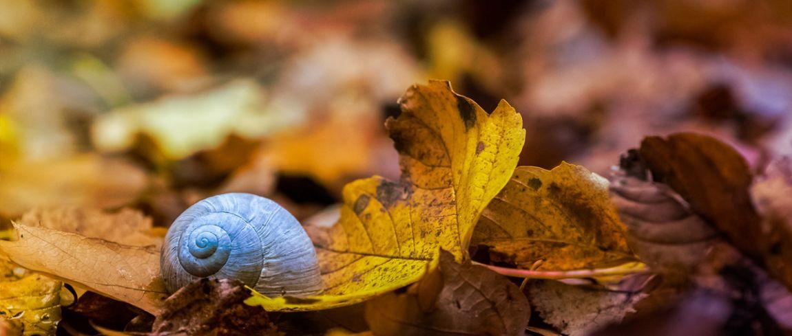 Hoe Maak Je Mooie Fotos Aan Het Einde Van De Herfst Digifoto Starter